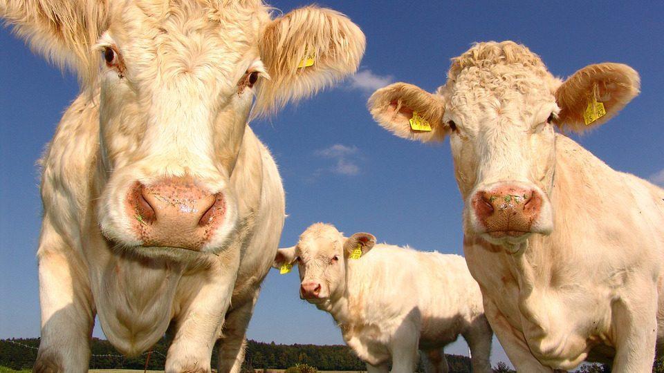 Aprire un'azienda agricola 6