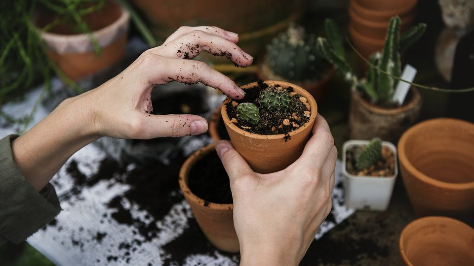 Aprire partita iva giardiniere 1
