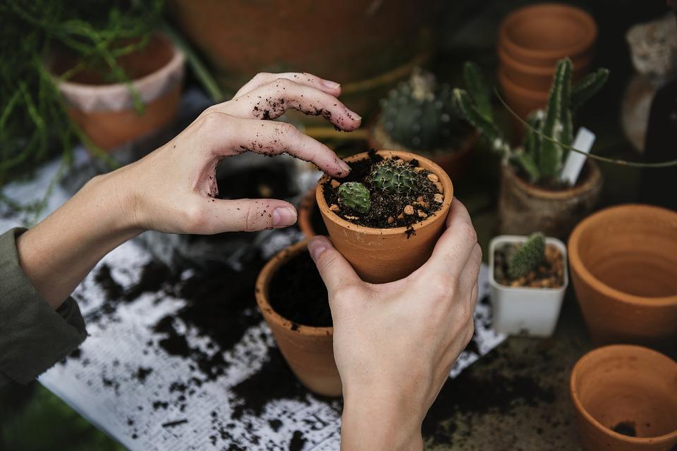 Aprire partita iva giardiniere
