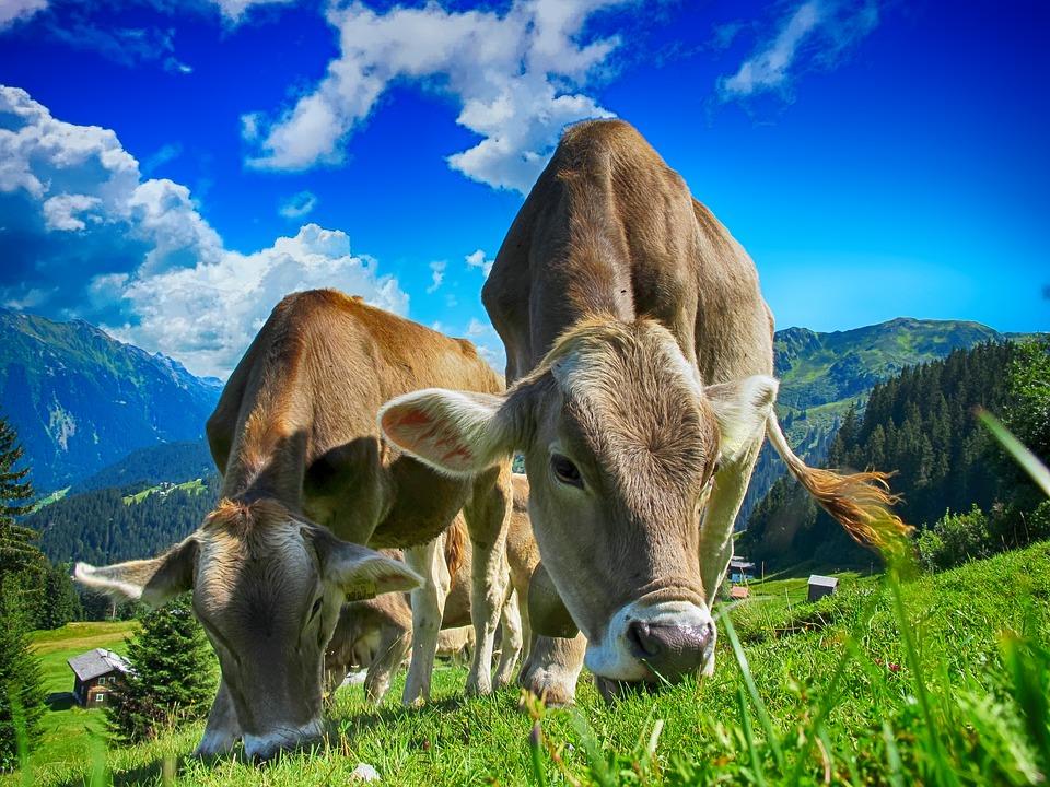 Agricoltura 2020: tutti gli incentivi